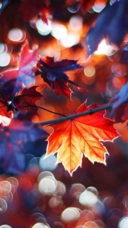 Herfst in aquarel